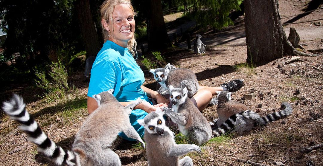 Kom på besøg i dyrenes verden